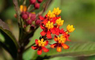 Plante tropicale vindecătoare