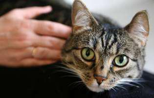Pisicile, printre cei mai buni terapeuți
