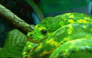 Vis șarpe - ce înseamnă când visezi șarpe