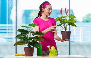 5 secrete pe care ți le-ar spune florile tale din casă