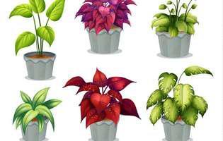 De ce devin lipicioase frunzele plantelor de interior