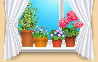 3 trucuri simple să îngrijești plantele iarna
