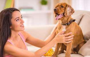 mituri false despre sănătatea animalelor de companie
