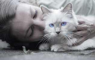 Semne că pisica ta are încredere în tine
