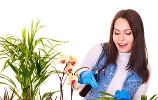 cum ingrijesti plantele de interior iarna