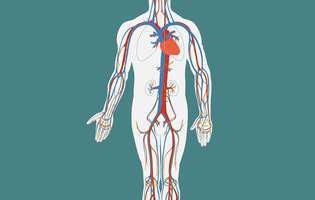 Vasculită - afecțiune a vaselor de sânge care afectează fluxul de sânge la nivelul organelor și țesuturilor. Imagine cu sistemul cardiovascular