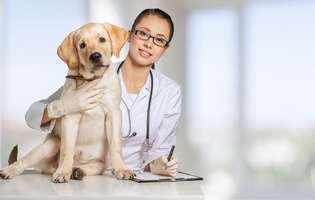afecțiuni ale câinilor pe care stăpânii le ignoră