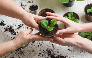Plante anti-răceală pe care le poți cultiva acasă. Măghiran