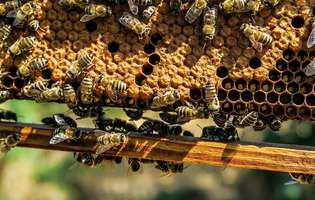 Ceara de albine naturală - 5 motive să o folosești
