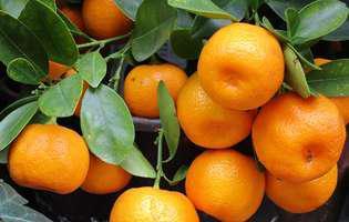 Cultivă mandarin în ghiveci - cum îl îngrijești