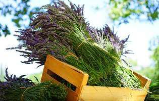 Ce plante medicinale poți crește în locuința ta