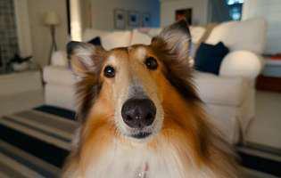 Câinele dresează stăpânul sau invers?