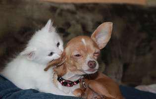 Cum scăpăm de purici - metode naturale pentru câini și pisici