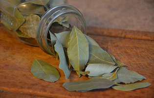 Frunzele de dafin încetinesc procesul de îmbătrânire