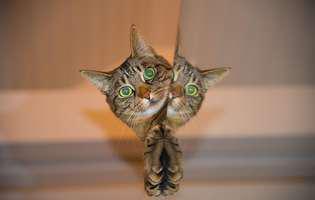 Pisicile au voie să mănânce iaurt?