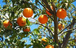 10 Alimente bogate în acid folic