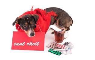 cum păcălești câinele să ia pastile