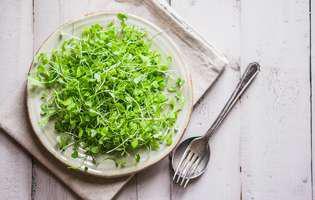 Mugurii de plante – beneficii uriașe pentru sănătate. Farfurie cu muguri de plante cu tacam
