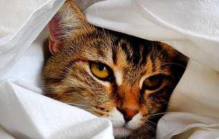 Pisicile pot să răcească - ce simptome au când sunt bolnave