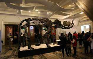 Noaptea Muzeelor 2017 are loc pe 20 mai