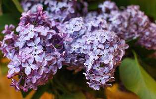 plante rezistente pentru grădinarii amatori
