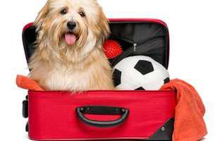 călătoria cu animalul de companie în străinătate