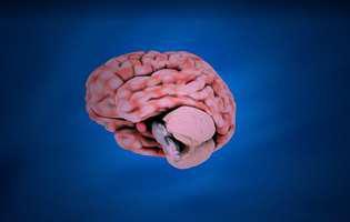 Hipopituitarism - afecțiune care influențează producția de hormoni pituitari și care poate fi controlată prin medicație. Imagine cu creierul și glanda pituitară