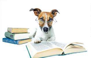 cum să dresezi câinele să învețe cuvinte