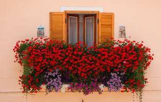 flori pentru jardiniere la geamuri