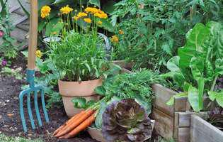 flori și ierburi aromatice benefice în grădină