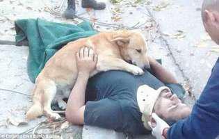 O poză face cât o mie de cuvinte. Câinele acesta e un adevărat erou și imaginea cu el a cucerit internetul