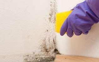 Cum scapi de mucegai cu preparate naturale. Ce ingrediente folosești