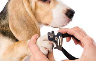 cum tai gheruțele câinelui