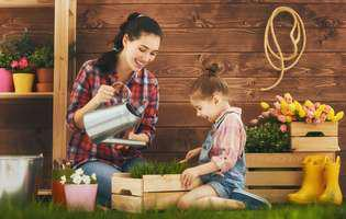plante medicinale pe care le poți cultiva ușor