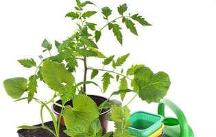 Poți planta legume și în miezul verii, la ghiveci sau în grădină