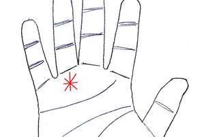 steaua din palme