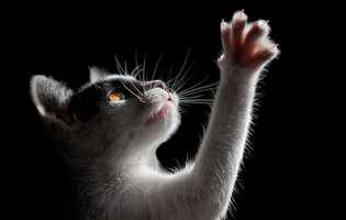 pisicile văd spirite din alta dimensiune