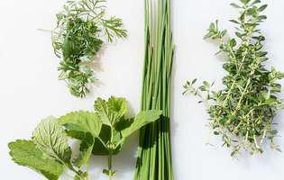 6 legume care tolerează umbra. Află care sunt ele