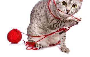 curiozități despre pisici mai puțin știute