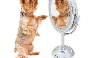 ce vede câinele tău în oglindă