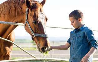 caii si copiii