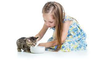 rase de pisici blânde