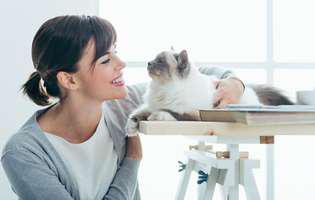 Pisica-te-apără-de-energii-negative
