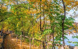 4 păduri din jurul Bucureștiului unde te poți plimba cu familia: Pădurea Cernica