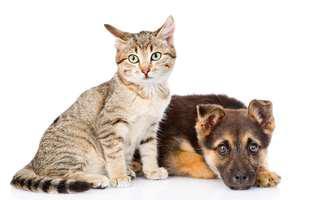 pisica e mai deșteaptă sau câinele?