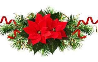 plantele decorative de Crăciun pot fi periculoase