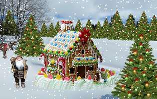 Bradul de Crăciun - 7 lucruri pe care nu le știai despre el