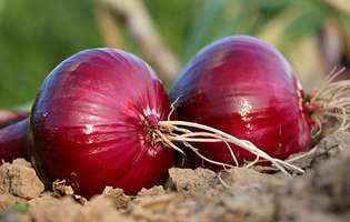 Ceapa roșie și motivele pentru care ar trebui să o consumi mai des