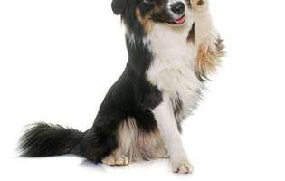 ce spune comportamentul ciudat al câinelui tău