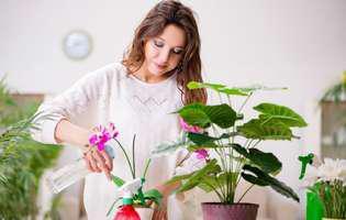 fertilizarea plantelor si tipuri de fertilizatori